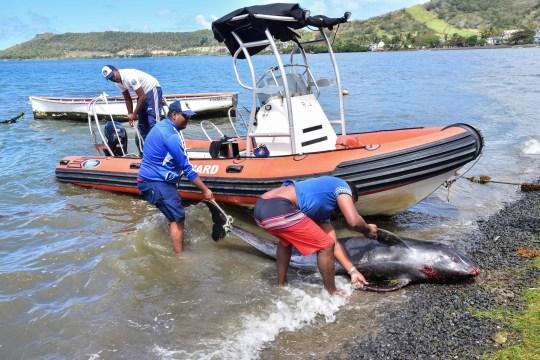 Cá heo con chết trên biển bị tràn dầu, cá heo mẹ vẫn cố đẩy đầu con lên khỏi mặt nước rồi qua đời theo con không lâu sau đó - Ảnh 6.