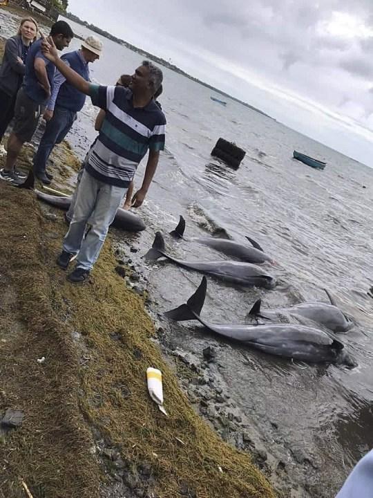 Cá heo con chết trên biển bị tràn dầu, cá heo mẹ vẫn cố đẩy đầu con lên khỏi mặt nước rồi qua đời theo con không lâu sau đó - Ảnh 7.