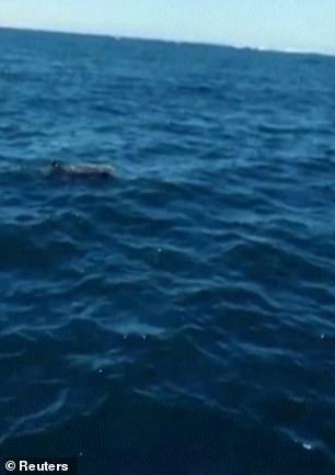 Cá heo con chết trên biển bị tràn dầu, cá heo mẹ vẫn cố đẩy đầu con lên khỏi mặt nước rồi qua đời theo con không lâu sau đó - Ảnh 9.