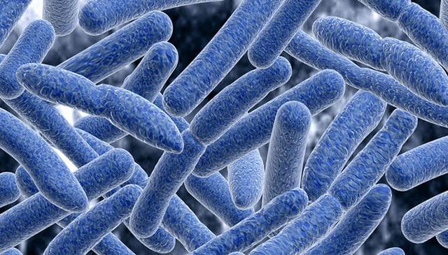 Chuyên gia Vũ Thế Thành: Bào tử Botulinum có trong rất nhiều loại thực phẩm nhưng vô hại, trừ khi vi khuẩn ngo ngoe sống lại... - Ảnh 2.