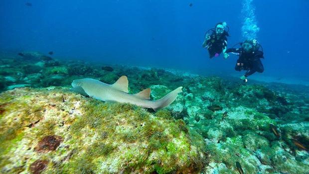 Fernando de Noronha - Quần đảo chỉ chào đón du khách đã mắc COVID-19 - Ảnh 3.
