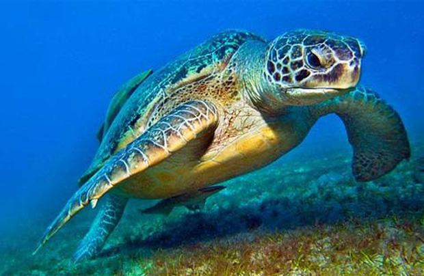 Bỏ khoản tiền lớn ra cứu 1 con rùa, vài ngày sau, người đàn ông nhận được báo đáp ngoài tưởng tượng - Ảnh 2.