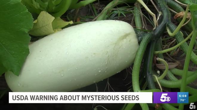 Chưa kịp cảnh báo, nông dân Mỹ đã trồng thử hạt giống bí ẩn từ Trung Quốc và kết quả chúng mọc... như điên - Ảnh 3.