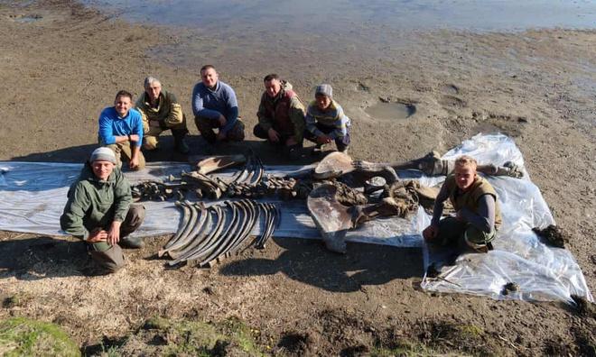Băng tan tại Bắc Cực để lộ hài cốt voi ma mút 10.000 năm tuổi vẫn còn nguyên gân và da - Ảnh 4.