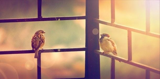 Tìm cách thoát khỏi phòng kín qua ô cửa sổ, chú chim bỏ mạng vì bị lừa đau mà không nhận ra: Cảnh tỉnh nhiều người! - Ảnh 1.
