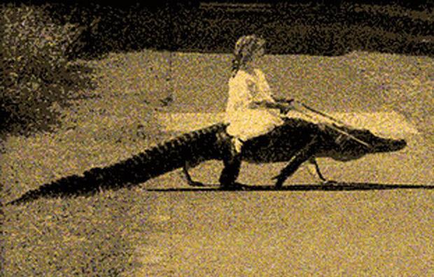 Đứa trẻ ôm ấp bé cá sấu mà mặt thản nhiên như không có gì và hàng loạt thể loại thú cưng không phải ai cũng dám nuôi - Ảnh 3.