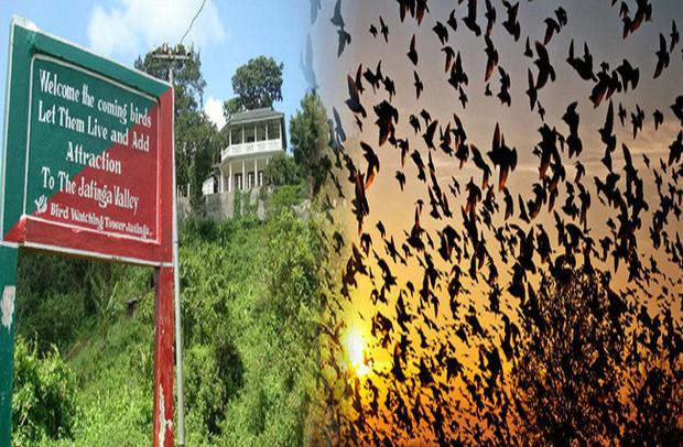 Chuyện rùng rợn về ngôi làng bí ẩn nơi có hàng ngàn con chim bay đến tự sát, 100 năm qua vẫn khiến nhà khoa học đau đầu đi tìm lời giải - Ảnh 1.