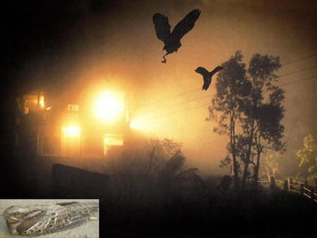 Chuyện rùng rợn về ngôi làng bí ẩn nơi có hàng ngàn con chim bay đến tự sát, 100 năm qua vẫn khiến nhà khoa học đau đầu đi tìm lời giải - Ảnh 2.