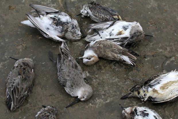 Chuyện rùng rợn về ngôi làng bí ẩn nơi có hàng ngàn con chim bay đến tự sát, 100 năm qua vẫn khiến nhà khoa học đau đầu đi tìm lời giải - Ảnh 4.