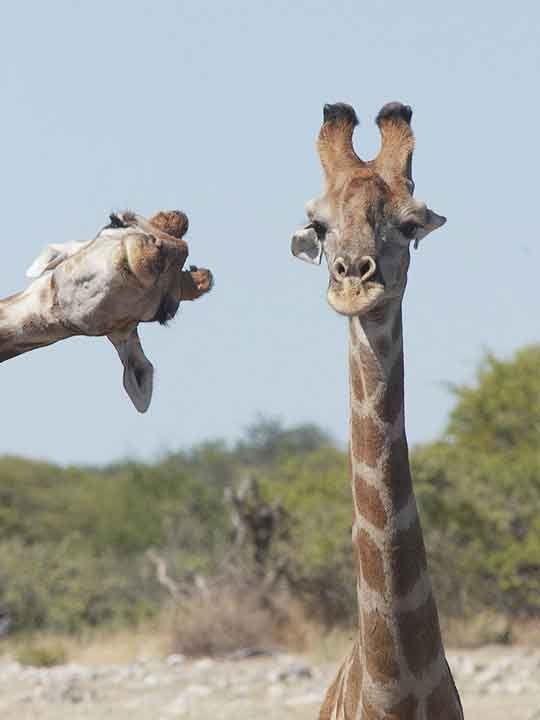 Bật cười với ảnh động vật hoang dã hài hước, vui nhộn - Ảnh 12.
