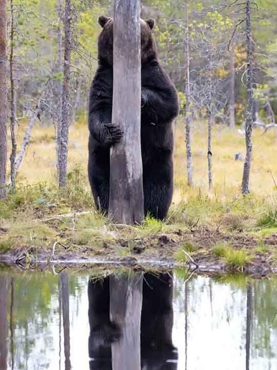 Bật cười với ảnh động vật hoang dã hài hước, vui nhộn - Ảnh 14.