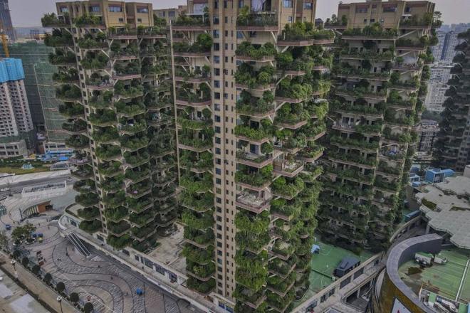 Cây cối tràn ngập dự án chung cư ở Trung Quốc, biến thiên đường sinh thái thành khu rừng muỗi đốt - Ảnh 2.
