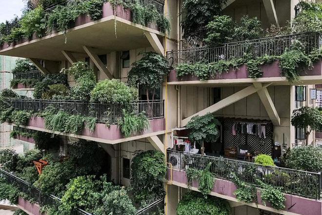 Cây cối tràn ngập dự án chung cư ở Trung Quốc, biến thiên đường sinh thái thành khu rừng muỗi đốt - Ảnh 3.