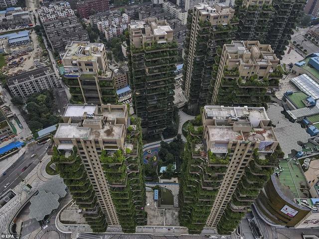 Cây cối tràn ngập dự án chung cư ở Trung Quốc, biến thiên đường sinh thái thành khu rừng muỗi đốt - Ảnh 1.