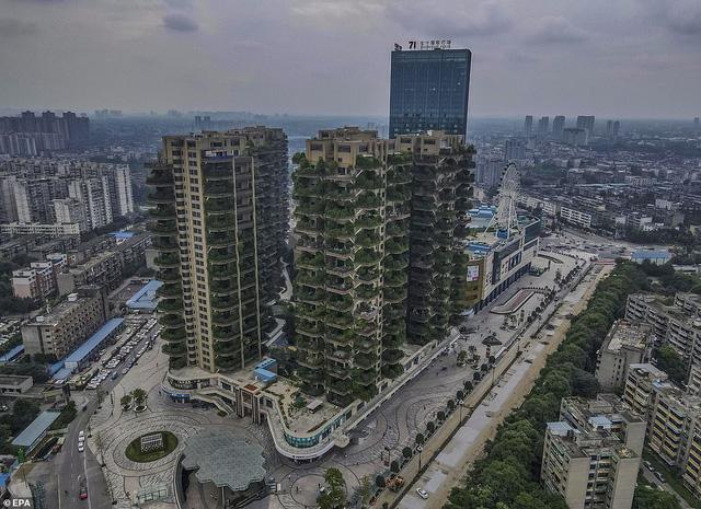 Cây cối tràn ngập dự án chung cư ở Trung Quốc, biến thiên đường sinh thái thành khu rừng muỗi đốt - Ảnh 6.
