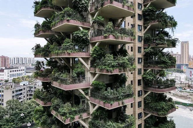 Cây cối tràn ngập dự án chung cư ở Trung Quốc, biến thiên đường sinh thái thành khu rừng muỗi đốt - Ảnh 4.