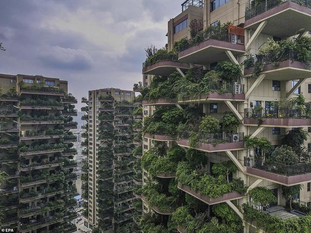 Trung Quốc tham vọng xây thiên đường sinh thái nhưng lại hóa thành phố ma vì… muỗi - Ảnh 4.