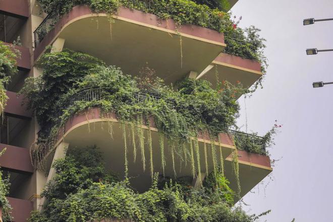 Cây cối tràn ngập dự án chung cư ở Trung Quốc, biến thiên đường sinh thái thành khu rừng muỗi đốt - Ảnh 5.