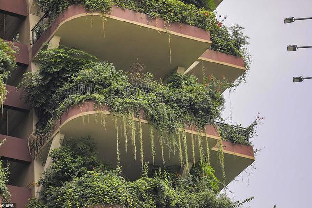 Trung Quốc tham vọng xây thiên đường sinh thái nhưng lại hóa thành phố ma vì… muỗi - Ảnh 6.