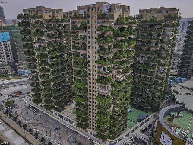 Trung Quốc tham vọng xây thiên đường sinh thái nhưng lại hóa thành phố ma vì… muỗi - Ảnh 7.