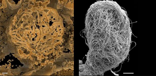 Dùng máy chụp cắt lớp, các nhà khoa học Trung Quốc phát hiện tinh trùng khổng lồ 100 triệu năm tuổi trong hổ phách hiếm - Ảnh 3.