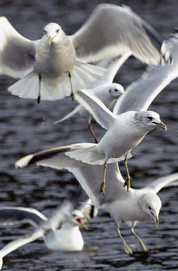 Được báo có chim quý ở bãi đậu xe, các nhân viên tới nơi phát hiện sự thật cười ra nước mắt - Ảnh 2.