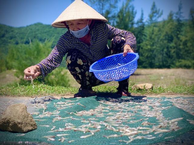 Ngư dân Hà Tĩnh trúng đậm cá cơm, mỗi ngày thu tiền triệu - Ảnh 12.