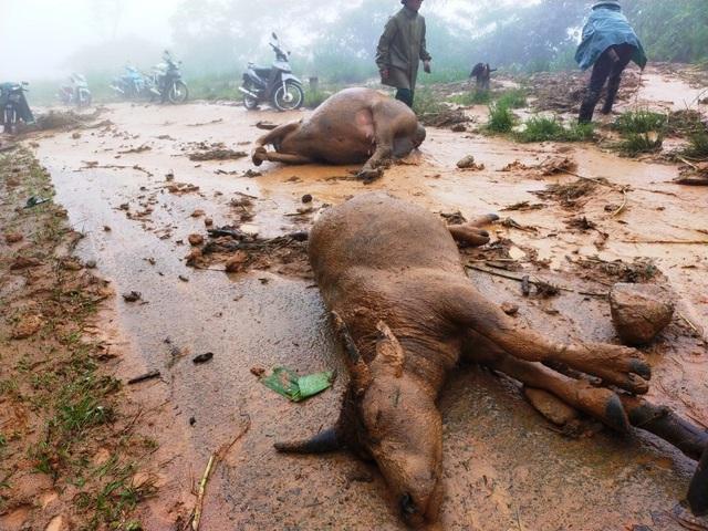 Cơn bão số 5: Sạt lở đất sau bão vùi lấp đàn trâu 8 con ở Nghệ An - Ảnh 4.