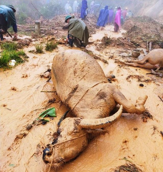Cơn bão số 5: Sạt lở đất sau bão vùi lấp đàn trâu 8 con ở Nghệ An - Ảnh 5.