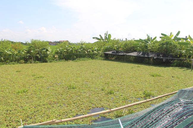 Nam Định: Nuôi con chậm chạp, bò quanh ao, tới mùa đẻ rõ lắm, anh nông dân thành tỷ phú - Ảnh 1.