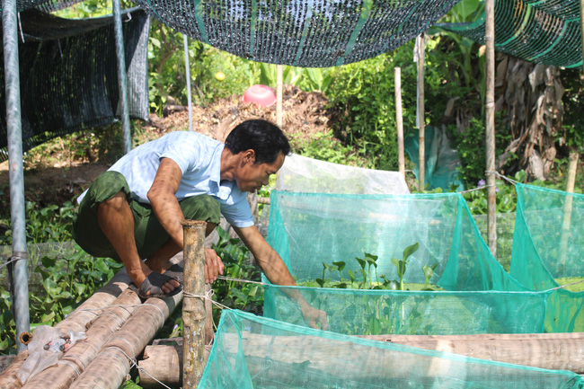 Nam Định: Nuôi con chậm chạp, bò quanh ao, tới mùa đẻ rõ lắm, anh nông dân thành tỷ phú - Ảnh 3.