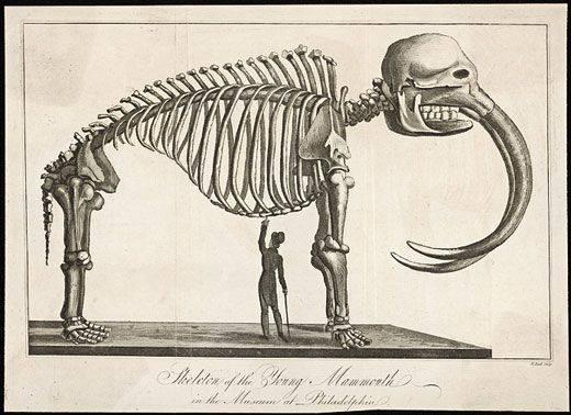 Khủng long đến xương cũng không để lại, vậy làm sao người ta biết được chúng trông thế nào khi còn sống? - Ảnh 16.