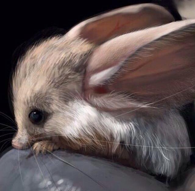 Loài vật tí hon kỳ lạ này trông giống như sự pha trộn giữa chuột, thỏ, lợn và một con chuột túi - Ảnh 2.