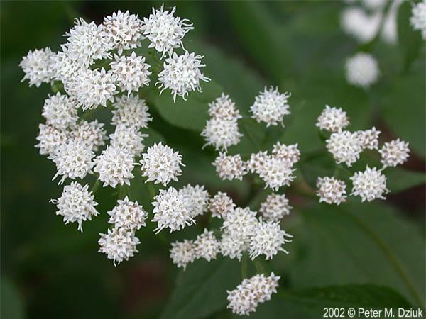 Loài hoa mỏng manh từng cướp đi sinh mạng hàng nghìn người - Ảnh 1.