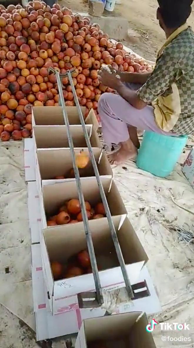 Bất ngờ trước cách chàng trai nước ngoài phân loại trái cây cực thông minh, tất cả đều nhờ… 2 thanh sắt như thế này! - Ảnh 4.