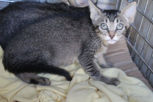 Chàng trai đem 3 con mèo về nuôi, 3 năm sau ai cũng bất ngờ khi bước vào căn nhà của anh - Ảnh 2.