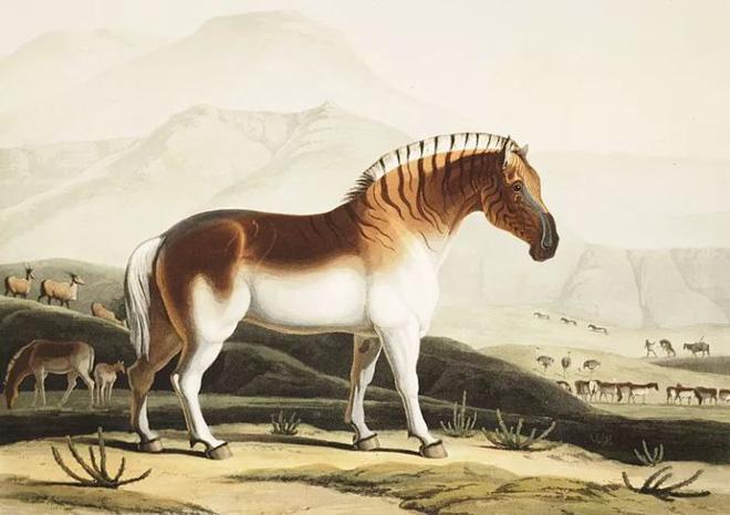 Đã tuyệt chủng một thế kỷ, liệu loài ngựa vằn tàn lụi này có thể thực sự sống lại? - Ảnh 3.