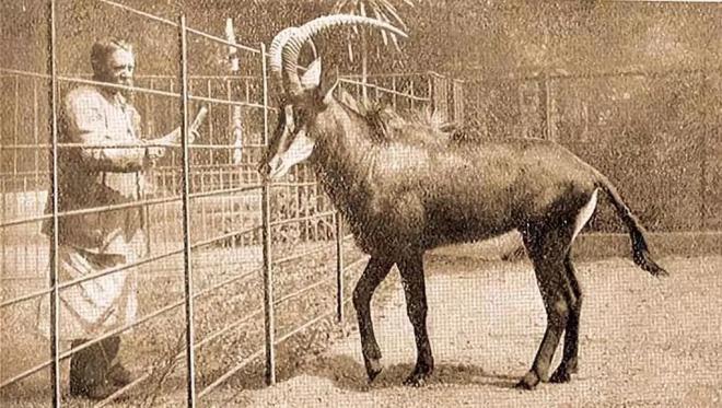 Đã tuyệt chủng một thế kỷ, liệu loài ngựa vằn tàn lụi này có thể thực sự sống lại? - Ảnh 5.