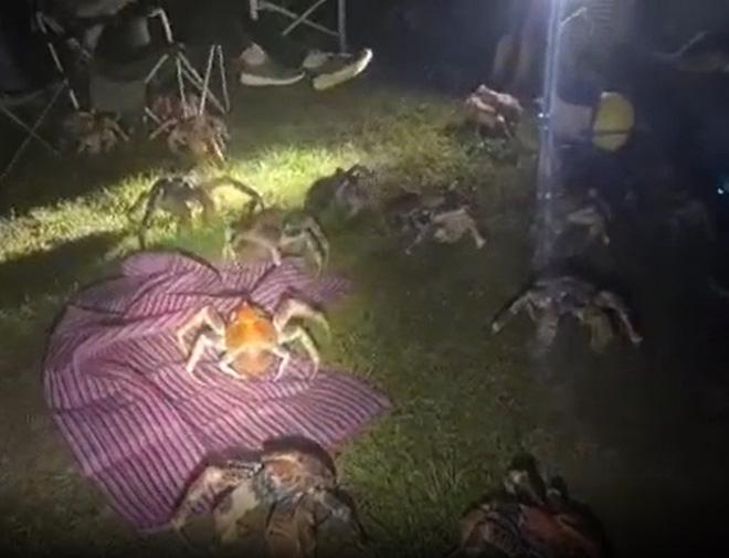 Tìm nơi vắng cắm trại nướng thịt ban đêm, gia đình run bần bật khi thấy binh đoàn quái vật khổng lồ tấn công, nhìn kỹ mới biết là gì - Ảnh 3.