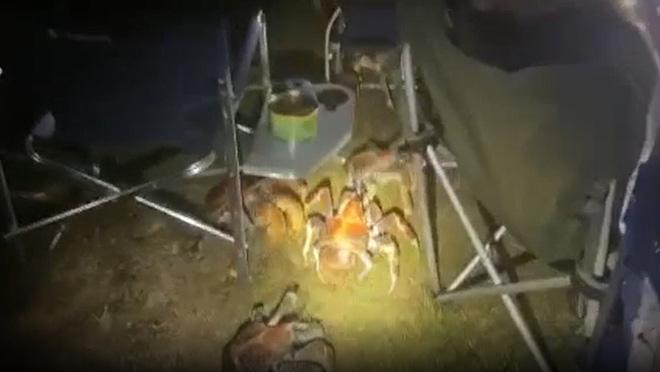 Tìm nơi vắng cắm trại nướng thịt ban đêm, gia đình run bần bật khi thấy binh đoàn quái vật khổng lồ tấn công, nhìn kỹ mới biết là gì - Ảnh 5.