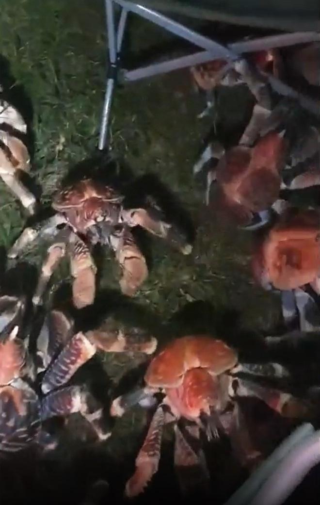 Tìm nơi vắng cắm trại nướng thịt ban đêm, gia đình run bần bật khi thấy binh đoàn quái vật khổng lồ tấn công, nhìn kỹ mới biết là gì - Ảnh 6.