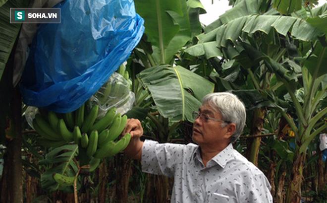 """Nông dân triệu đô Huy """"chuối"""": Từ kiệt sức vì trồng mía sai cách đến vùng canh tác 1.000ha đất trên 6 tỉnh"""