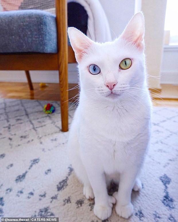 Bị chủ vứt ra đường vì mắt 2 màu và chân có nhiều ngón, cô mèo mắc hội chứng lạ khiến hội yêu động vật thổn thức, đòi nhận nuôi bằng được - Ảnh 5.