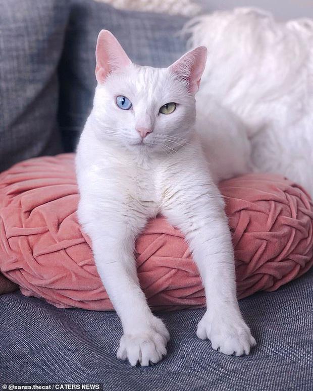 Bị chủ vứt ra đường vì mắt 2 màu và chân có nhiều ngón, cô mèo mắc hội chứng lạ khiến hội yêu động vật thổn thức, đòi nhận nuôi bằng được - Ảnh 6.
