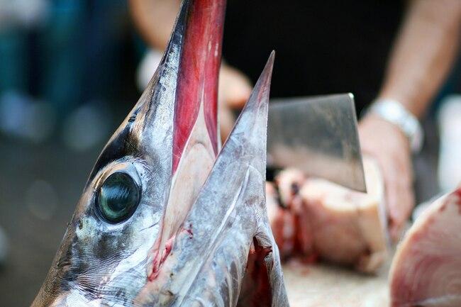 Cá - loại giàu omega-3, loại chứa độc tố: Cá hồi, rô phi, cá thu, cá ngừ... thuộc loại nào? - Ảnh 3.