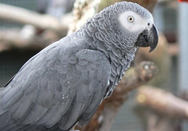 5 con vẹt bị đuổi khỏi công viên vì dạy nhau chửi bậy rồi chửi luôn cả khách tham quan - Ảnh 2.