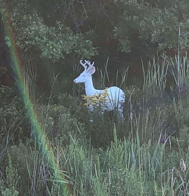 10 khoảnh khắc kỳ diệu của tự nhiên nhất định phải xem để mở mang tầm mắt - Ảnh 4.