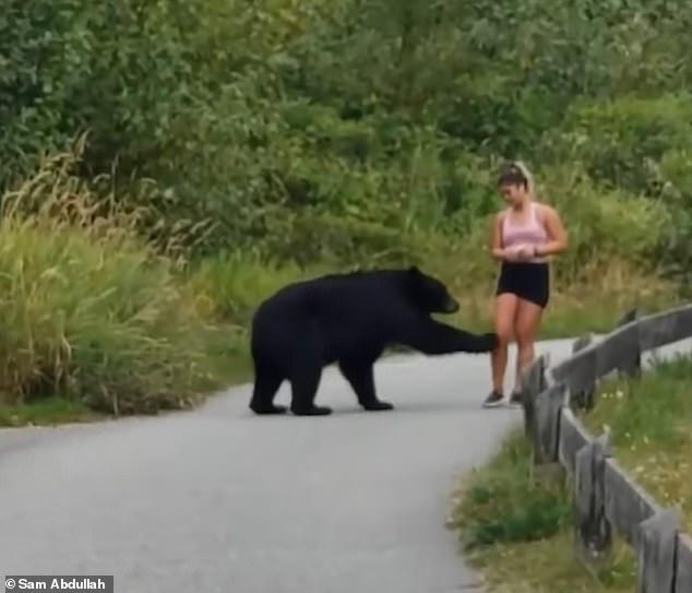 Gặp cô gái chạy bộ trên đường, gấu đen từ trong bụi rậm đi ra... sờ chân! - Ảnh 1.