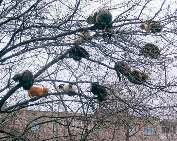 Những chú mèo được nuôi dạy bởi đám chim trời, chỉ thích tụ bạ ở ngọn cây - Ảnh 1.