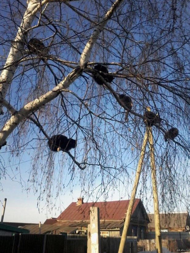 Những chú mèo được nuôi dạy bởi đám chim trời, chỉ thích tụ bạ ở ngọn cây - Ảnh 2.